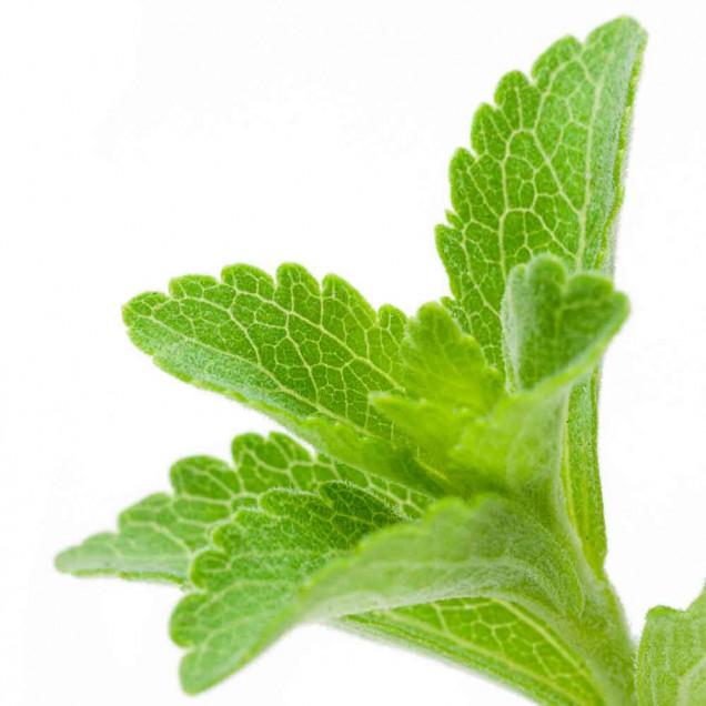 Vous croyez utiliser de la stévia ? – préparez-vous à des surprises !