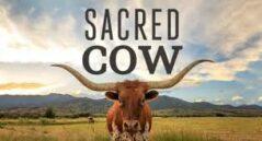 Sacred Cow - le film